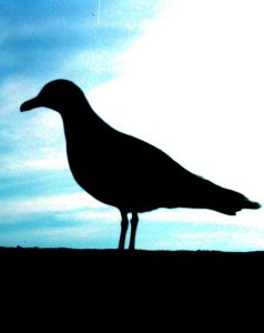 seagull-silhouette-cropped